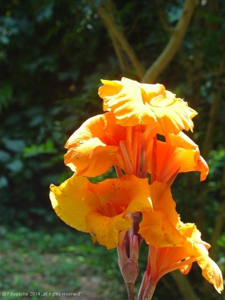 Indien2006_8521