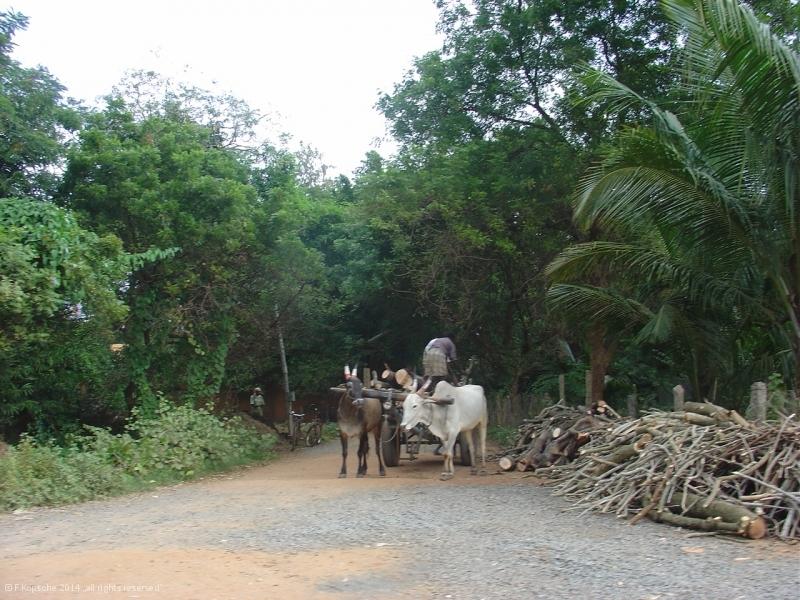 Indien2006_8732