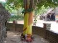Indien2006_8682