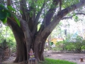 Indien2006_8689