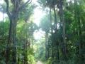 Indien2006_8698